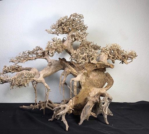 Bonsai Drift Wood Design