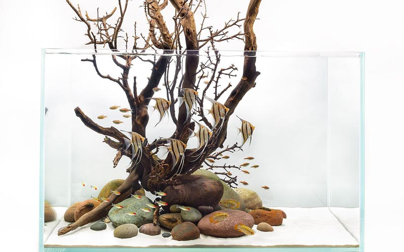 Bonsai Driftwood Design
